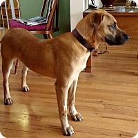 Adopt A Pet :: Hajime - Hainesville, IL