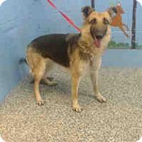 Adopt A Pet :: URGENT ON 2/25  San Bernardino - San Bernardino, CA