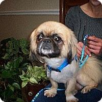 Adopt A Pet :: Fletch - Chantilly, VA