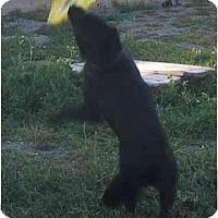Adopt A Pet :: Rosco - Los Alamitos, CA