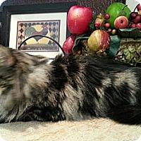 Adopt A Pet :: Anna Marie - Harrisburg, NC