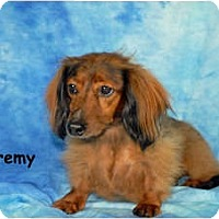Adopt A Pet :: Jeremy - Ft. Myers, FL