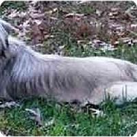 Adopt A Pet :: Benjie-PA - Mays Landing, NJ