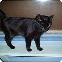 Adopt A Pet :: Carissa - Hamburg, NY