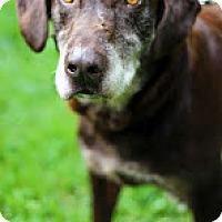 Adopt A Pet :: Henry - Tinton Falls, NJ