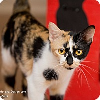 Adopt A Pet :: Vita - Fountain Hills, AZ