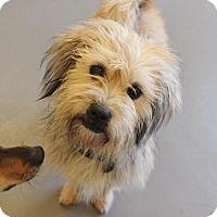 Adopt A Pet :: Chicklett - Atlanta, GA