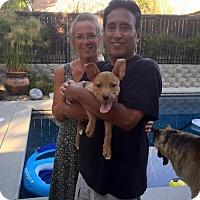 Adopt A Pet :: Rooney - Sacramento, CA