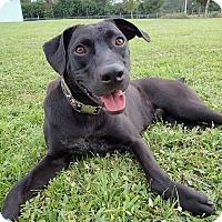 Adopt A Pet :: Goofy - Ft. Myers, FL