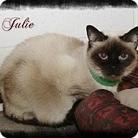 Adopt A Pet :: Julie - Shippenville, PA