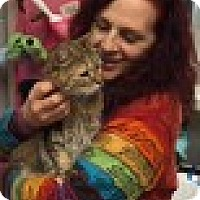 Adopt A Pet :: Thumbelina - Manchester, CT