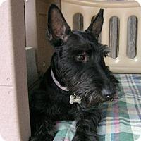Adopt A Pet :: Max *PENDING!* - Dallas, TX
