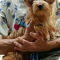 Adopt A Pet :: Pip - Baileyton, AL