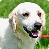 Adopt A Pet :: Jeff - New Canaan, CT
