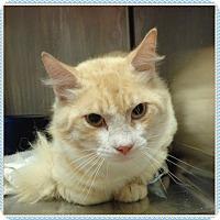 Adopt A Pet :: CLAUDE - Marietta, GA
