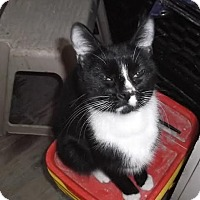 Adopt A Pet :: Daisy Mae - Acushnet, MA