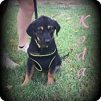 Adopt A Pet :: Koda - Denver, NC