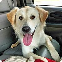 Adopt A Pet :: Ross - BIRMINGHAM, AL