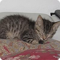 Adopt A Pet :: Simon - Palm Coast, FL