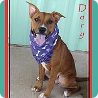 Australian Cattle Dog Dog for adoption in Hillsboro, Texas - Dory