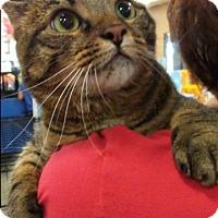 Adopt A Pet :: Maui - San Ramon, CA