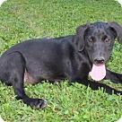 Adopt A Pet :: PUPPY FLORAL