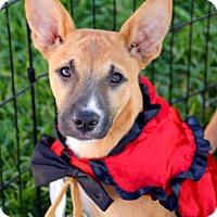 Adopt A Pet :: Destiny's Child Pup - Kelly - San Diego, CA