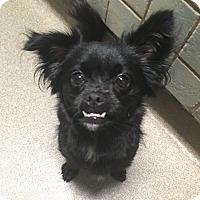 Adopt A Pet :: Bella - Boca Raton, FL