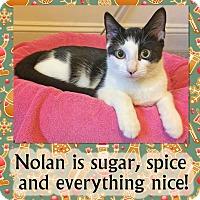 Adopt A Pet :: Nolan - East Brunswick, NJ