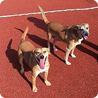 Adopt A Pet :: Lucille and Ricky - Carlsbad, CA