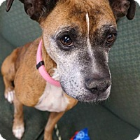 Adopt A Pet :: Lilly - Carroll, IA