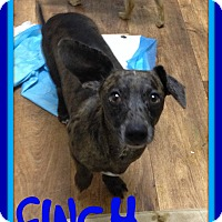 Adopt A Pet :: FINCH - Allentown, PA