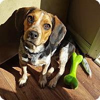 Adopt A Pet :: Maisy - Homewood, AL