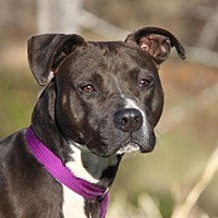 Adopt A Pet :: Molly (Spayed) - Marietta, OH