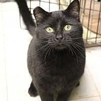 Adopt A Pet :: Whiskers - Yukon, OK
