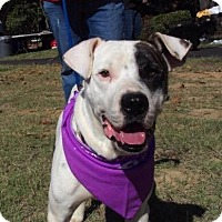 Adopt A Pet :: Petey Ready 4 a Home! - Olive Branch, MS