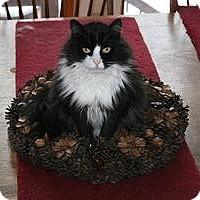 Adopt A Pet :: Adelyne - Fredericksburg, VA