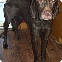 Adopt A Pet :: Journey - Oak Brook, IL