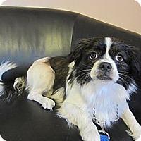 Adopt A Pet :: Danny - Culver City, CA