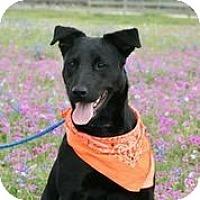 Adopt A Pet :: Ebony - Austin, TX
