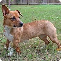 Adopt A Pet :: *Ayla - PENDING - Westport, CT
