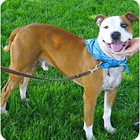 Adopt A Pet :: JD companion - Sacramento, CA