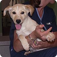 Adopt A Pet :: Gilligan - Birmingham, AL