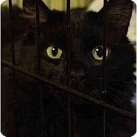 Adopt A Pet :: Abigail - Chesapeake, VA