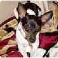 Adopt A Pet :: Princess Cali - Concord, CA
