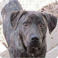 Adopt A Pet :: Sebastian - Afton, TN