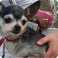 Adopt A Pet :: Tiny - Adoption Pending - Wapwallopen, PA