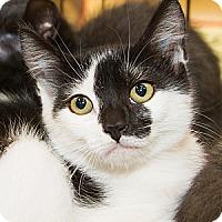 Adopt A Pet :: Lauren - Irvine, CA