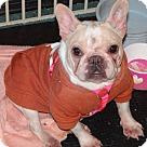 Adopt A Pet :: PORKCHOP