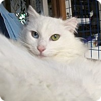 Adopt A Pet :: Snow White - Davis, CA